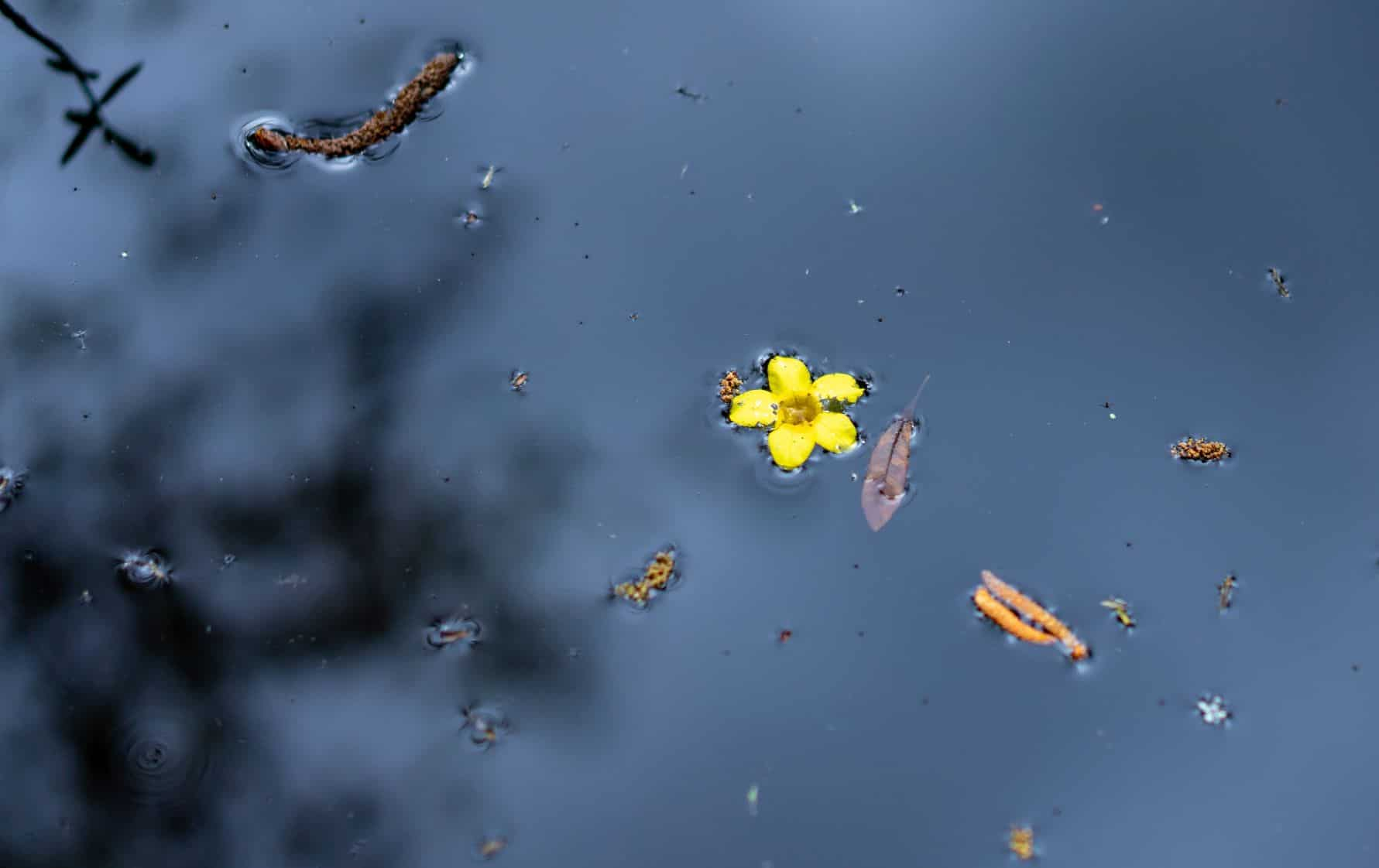 Single yellow flower floating in isolation